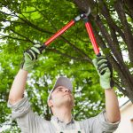 Why You Should Avoid DIY Pruning
