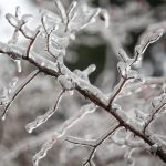 Tips on How to Care for Your Trees During the Winter